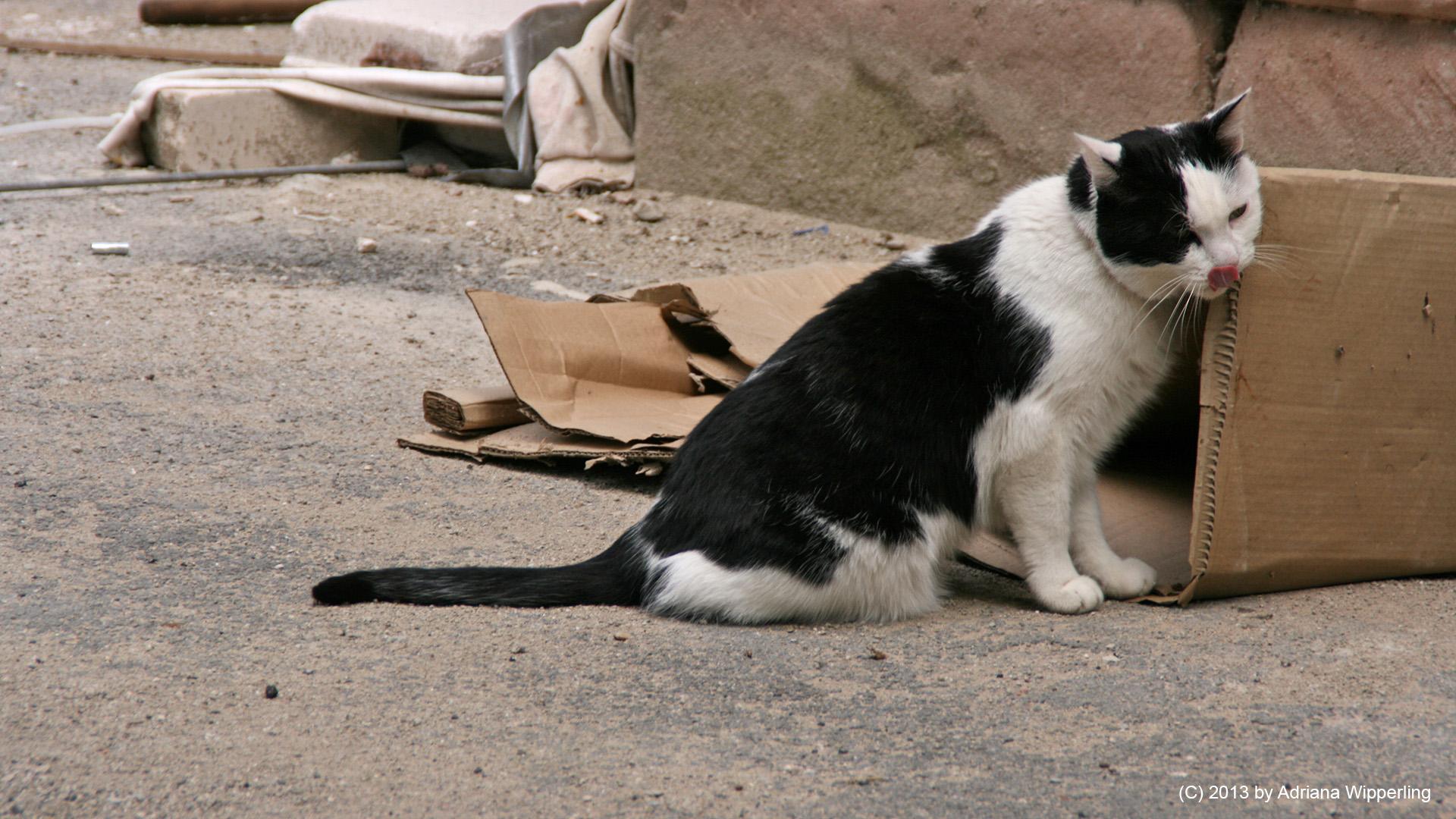 cats_5695