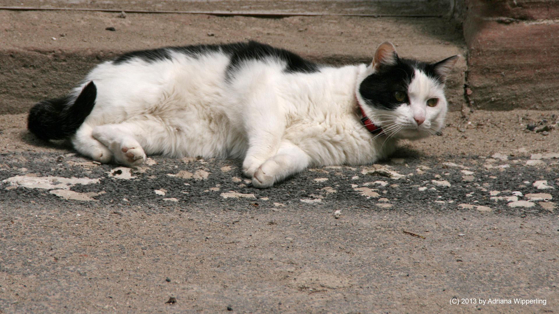 cats_5701