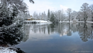 winter_1185