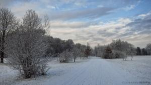 winter_1232