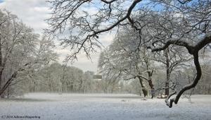 winter_1251