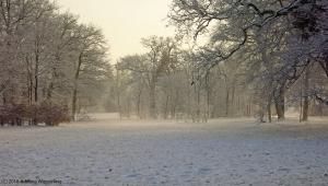 winter_1269