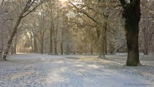 winter_1278