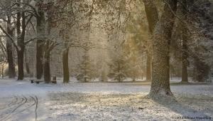 winter_1284