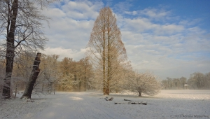 winter_1285