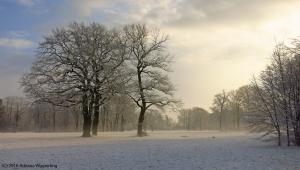 winter_1287