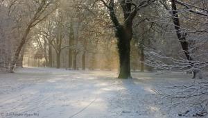 winter_1288