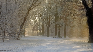 winter_1289