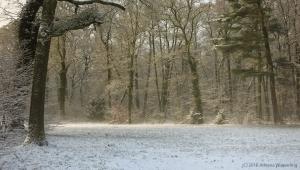 winter_1291