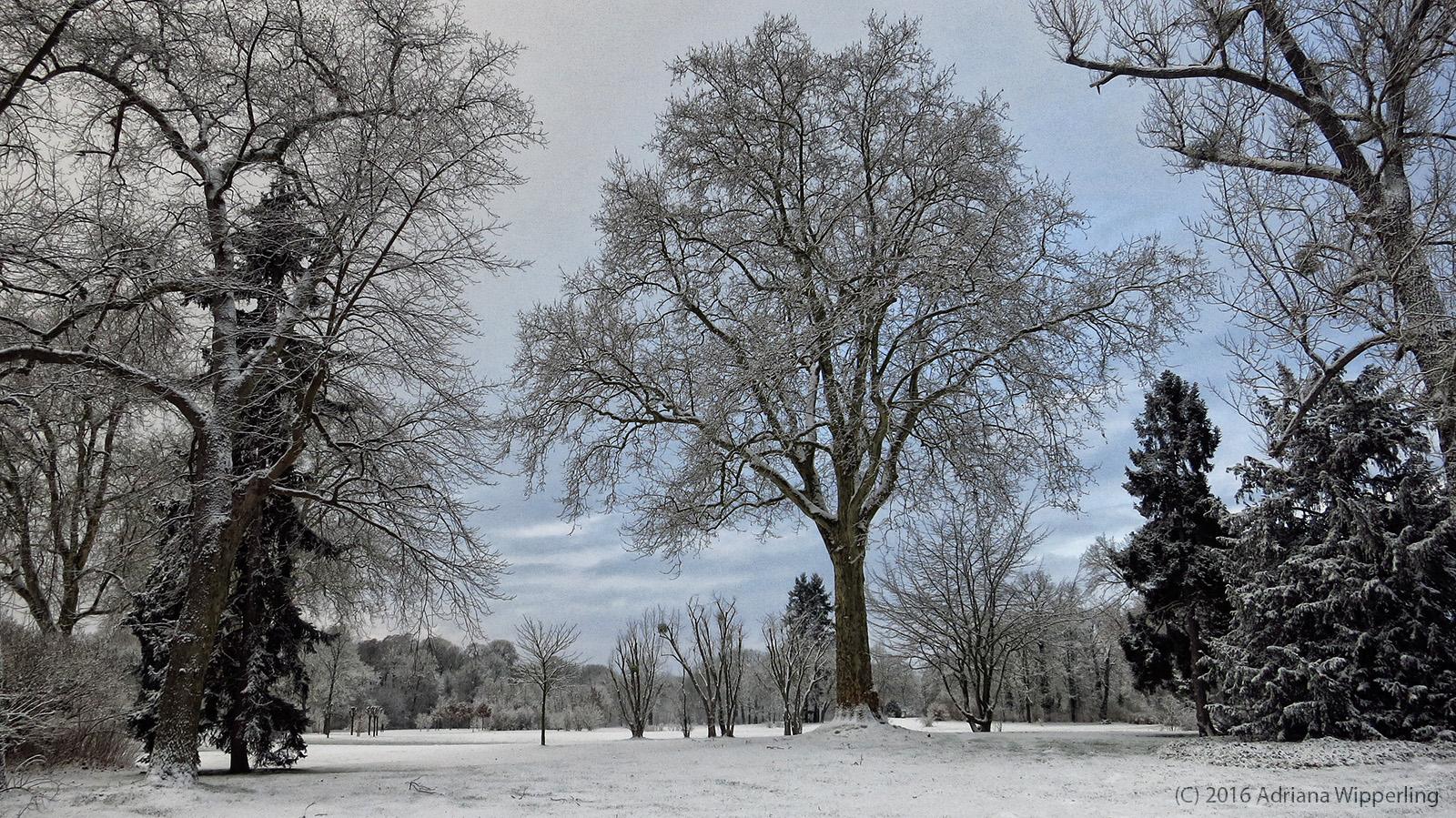 winter_1188
