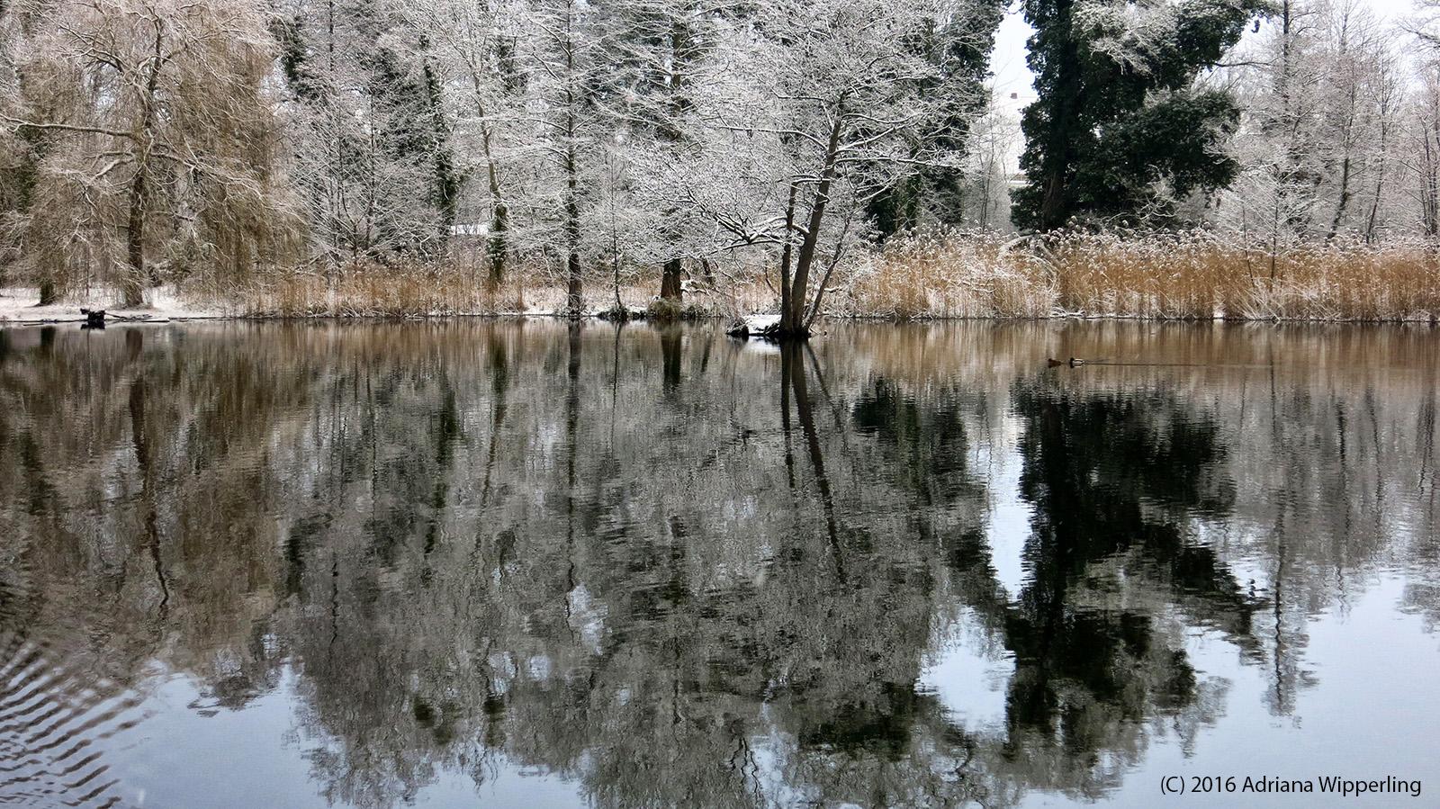 winter_1189