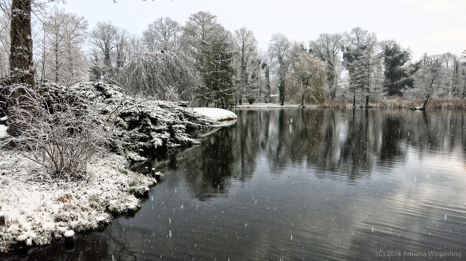 winter_1196
