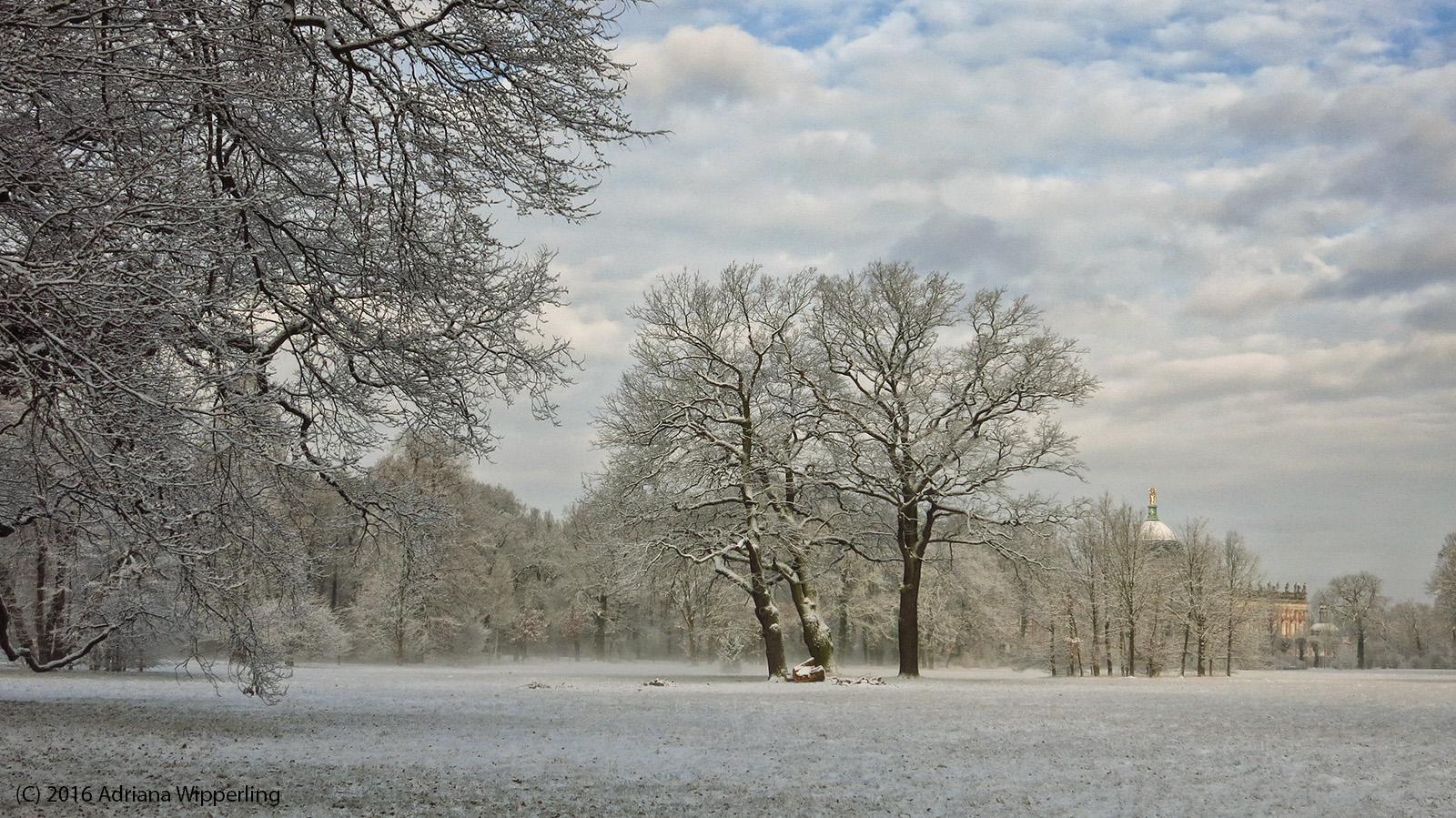 winter_1249