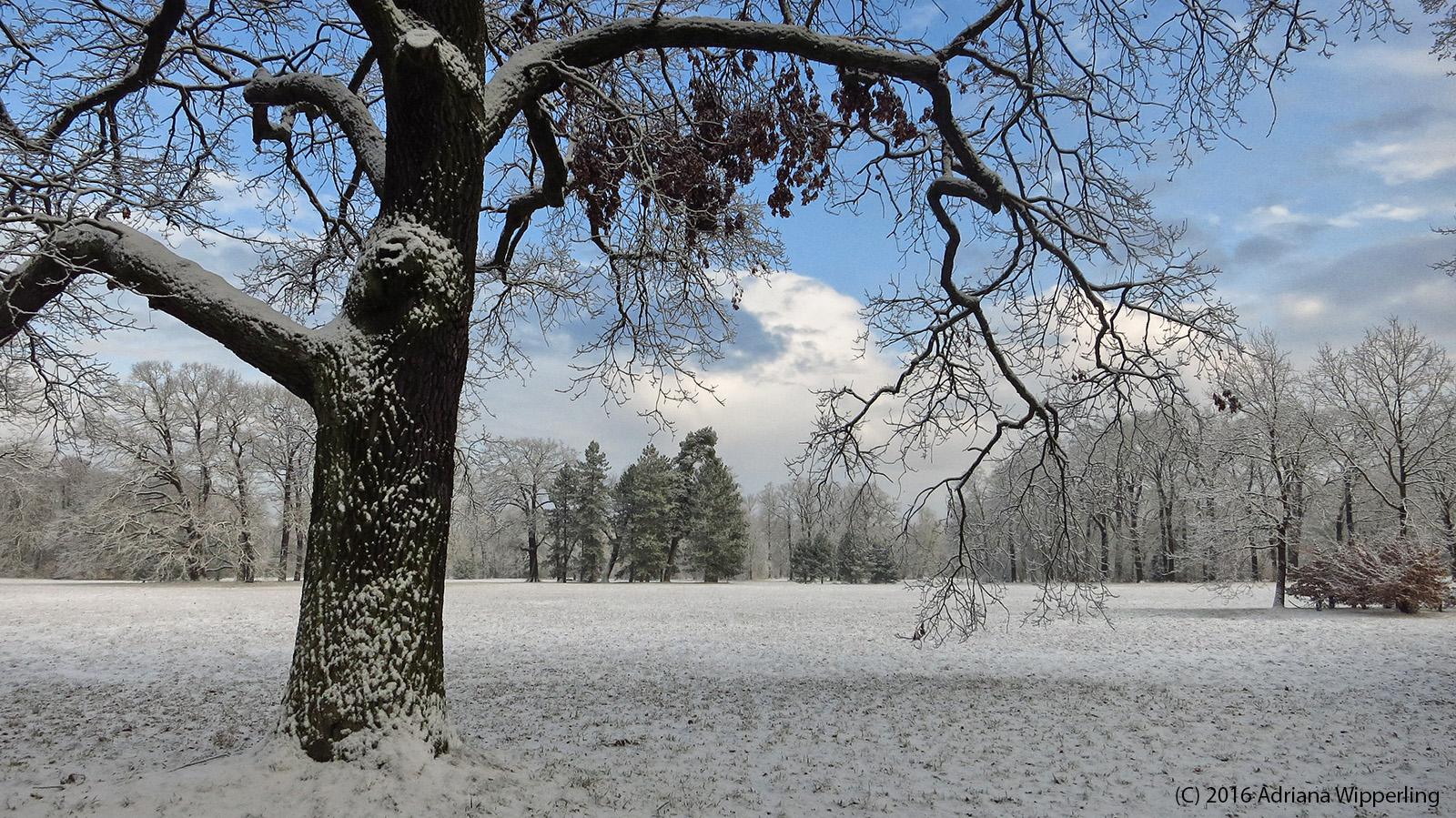 winter_1250