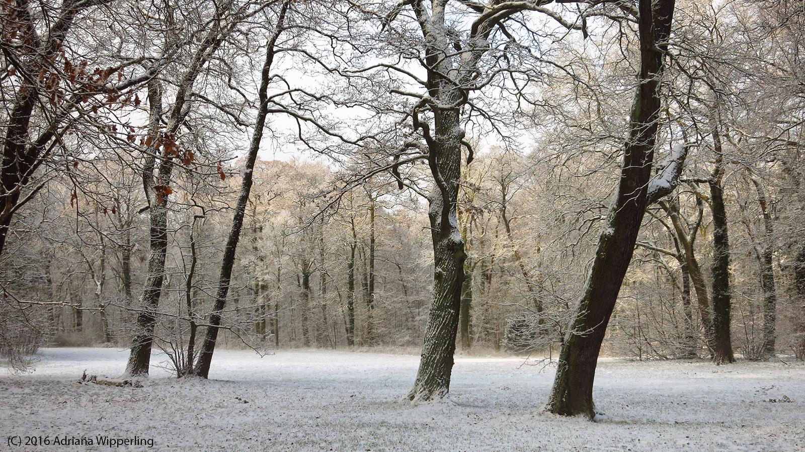 winter_1254