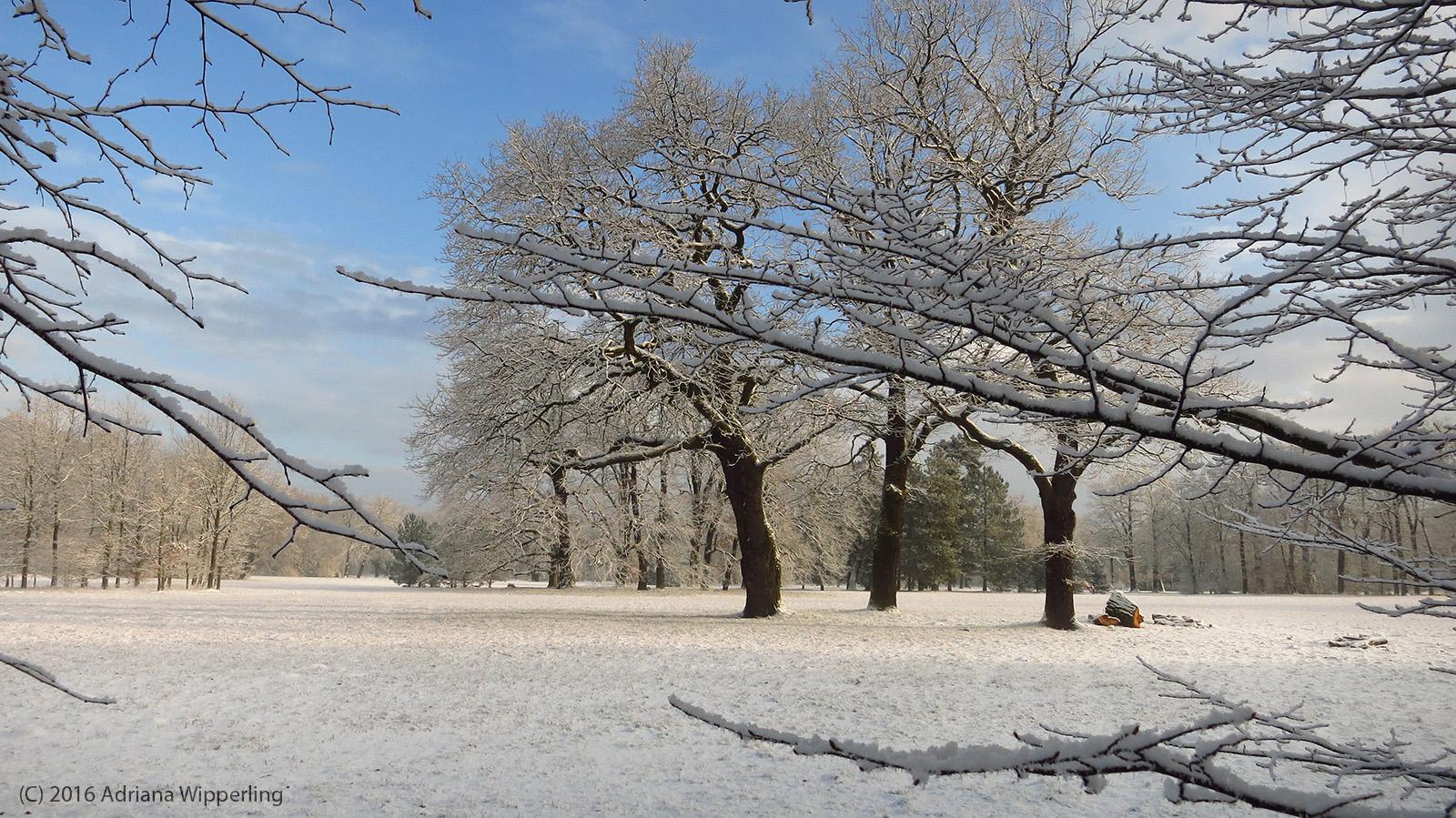winter_1262