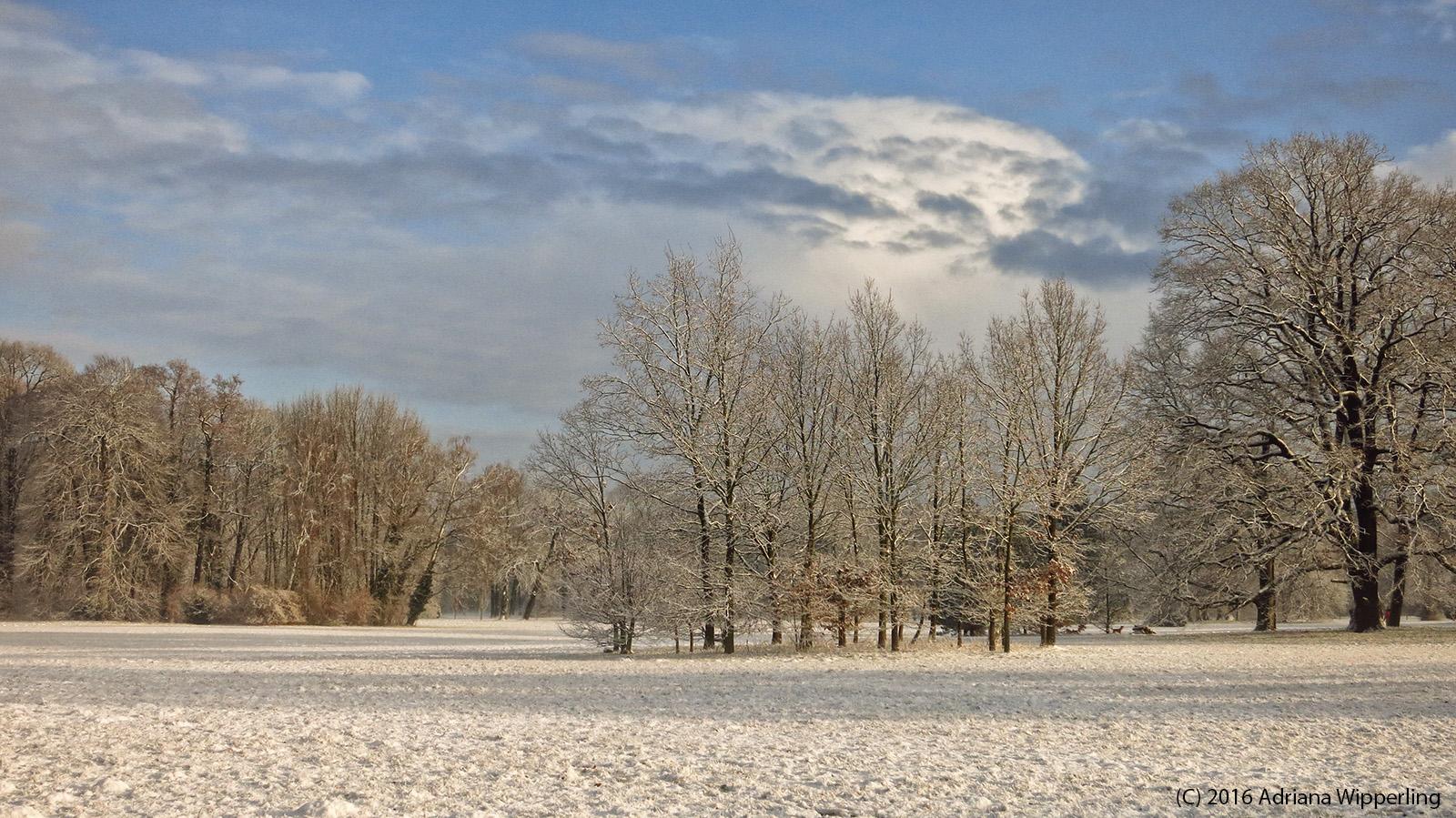 winter_1273