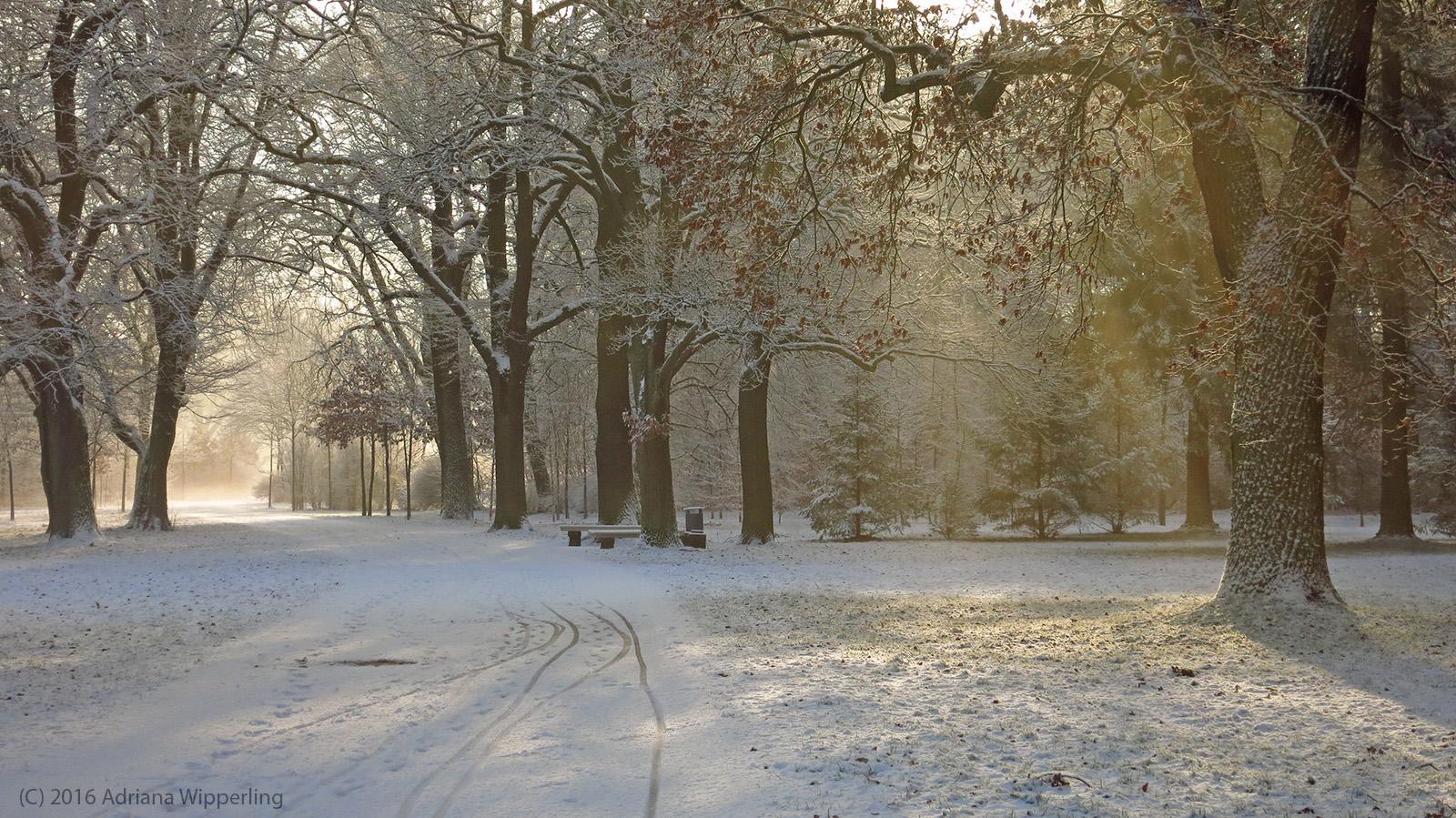 winter_1281