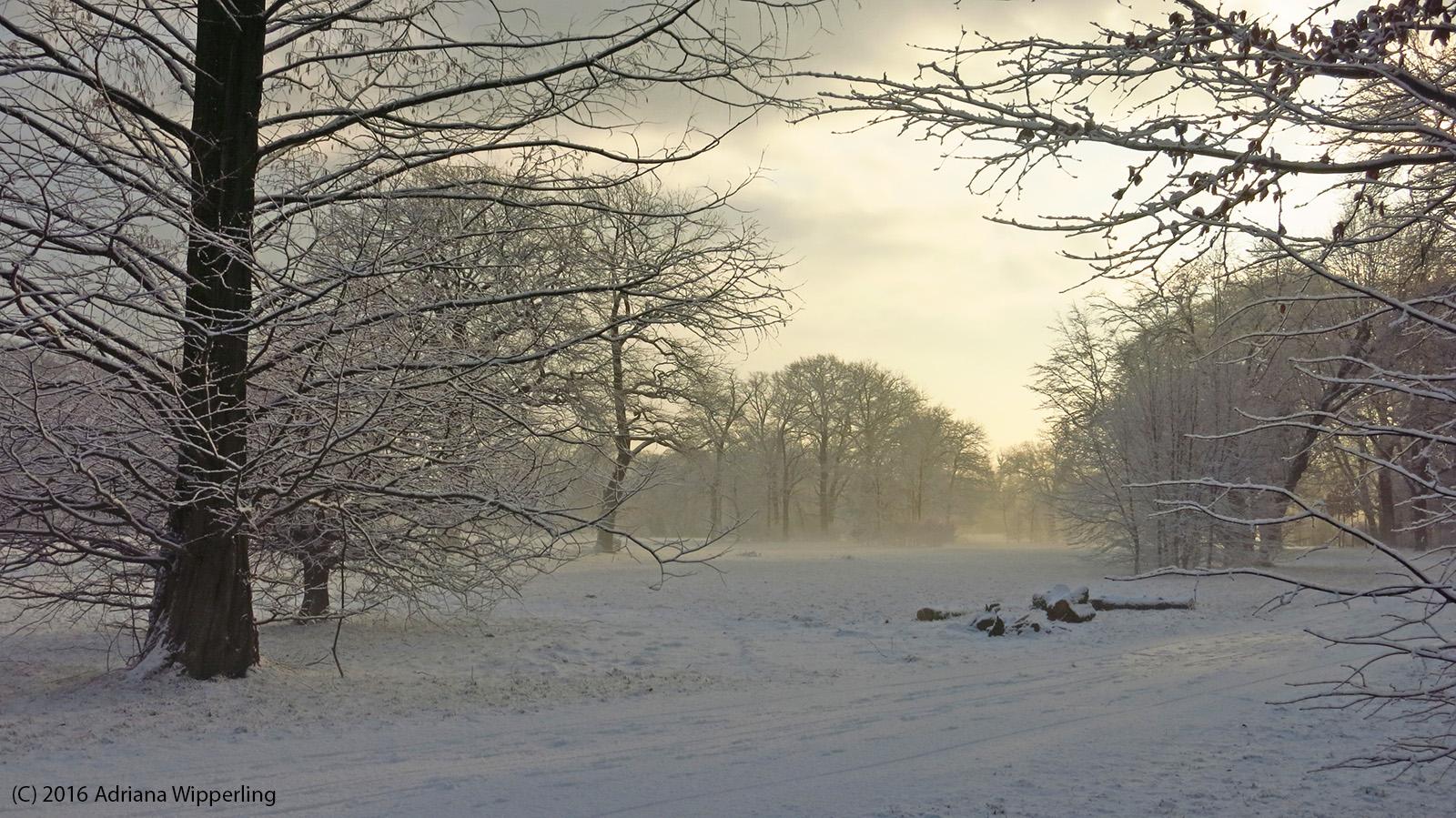 winter_1294