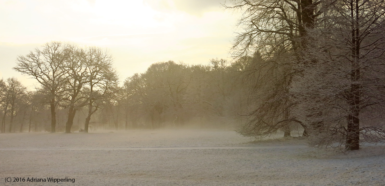 winter_1301